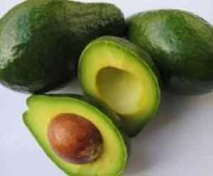abacateiro (1)
